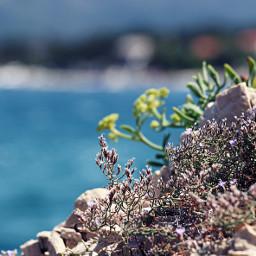 beach nature croatia sea photography