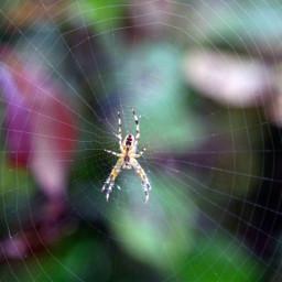 freetoedit nature naturephotography spider spiderweb