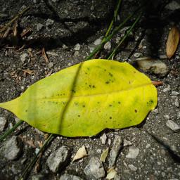 photography leaf shadow тень лист