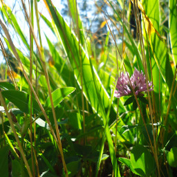 photography flower grass warmcolor