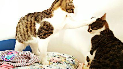 freetoedit cat cats wapcat funny
