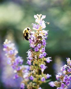 bee flowers colorful bokeh