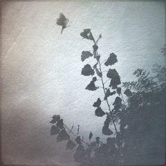 art texture clipart nature blackandwhite