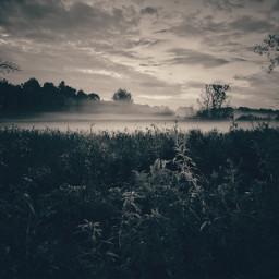 fog blackandwhite monochrome bnw_life bnwmood