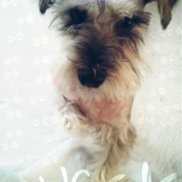 lucky dog beautiful germanmex