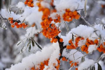freetoedit snow could frost flower