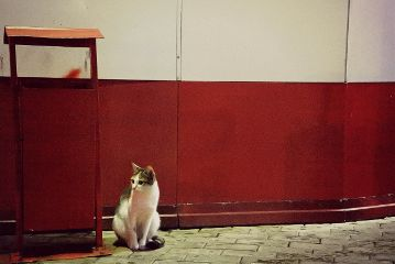 freetoedit nature cat photography