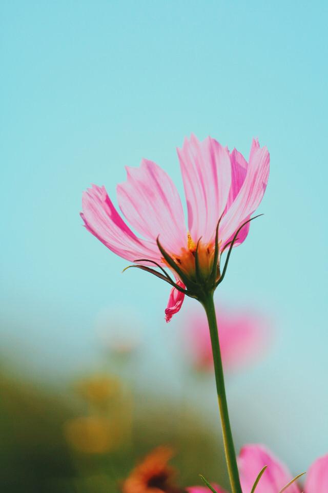 flower 🌼