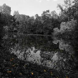 autumnleaves blackandwhite photography samsungs7edge canon_photos