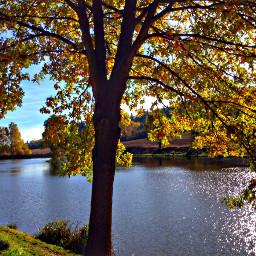 tree treeoflife nature leaves water freetoedit