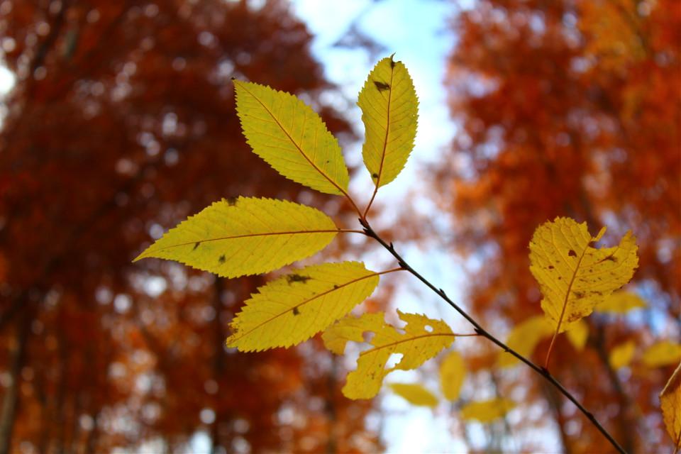 #tree #fall #yellow #nature #photography