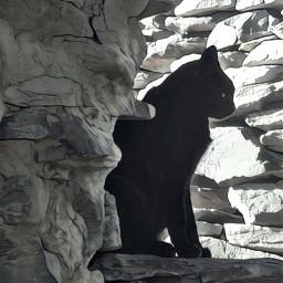 black nature animals freetoedit