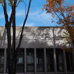 sky bluesky autumn shadow trees