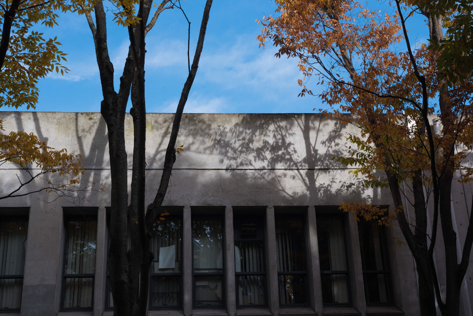 Art is everywhere.  #sky #bluesky #autumn #shadow #trees #leaves #autumncolors #nikonphotography #nikond750 #nakaming #nikon