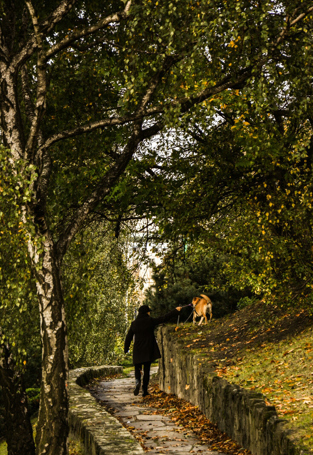 Walking with best friend 🐶 #emotions #nature #fall #autumn #dog #park #colorful #leafs #poland #poznan  #FreeToEdit