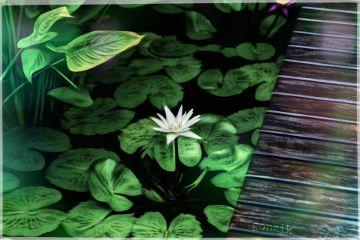 bokeh flower photography